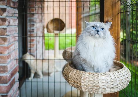Передержка кошек -  кому доверить уход за питомцем в отпуске